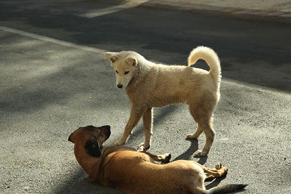 Deux chiens à sreet