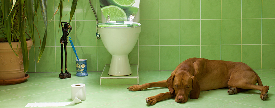 dog lying in the bathroom with toilet