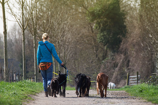 Back of Dogwalker walk with a group of dogs