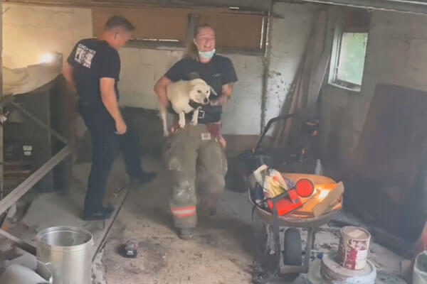 The firefighter then quickly walks Gertie out of the garage and reunited her with her owner.