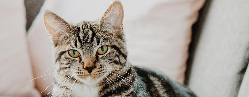 Cat Closer Look