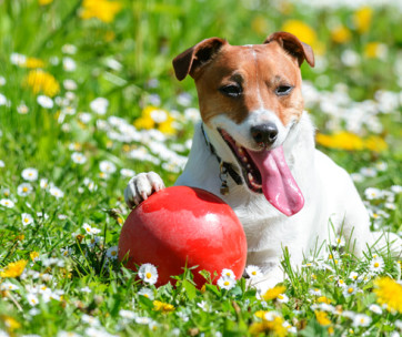best herding balls for dogs