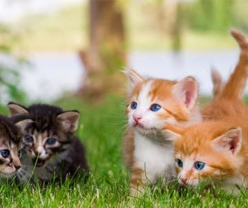 10 Cutest Kitten Breeds