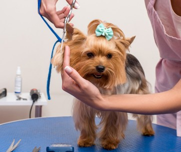 10 Expert Dog Grooming Tips