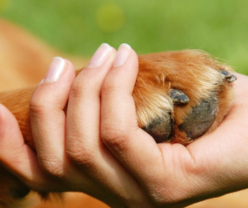 10 Facts You Didnt Know About Dog Paws