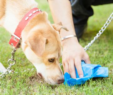 10 ways to pick up dog poop
