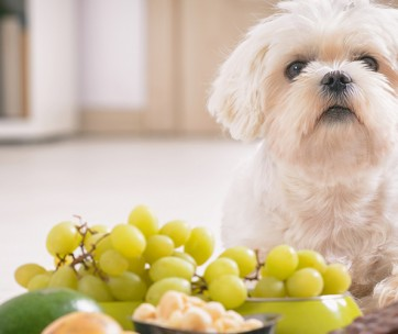 15 Foods That Are Bad For Dogs