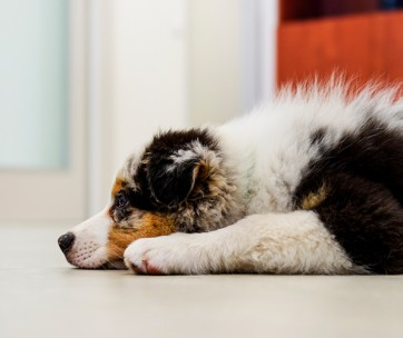 15 ways to help relieve your dog's boredom