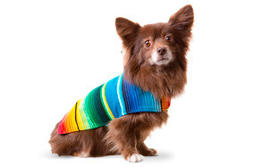 Baja Ponchos Handmade Dog Sweater