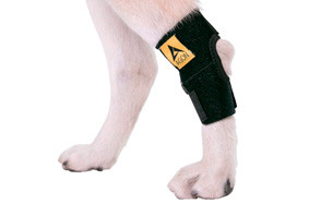 Agon Dog Rear Hock Joint Dog Knee Brace