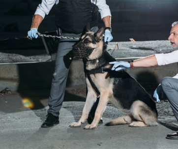 5 Best Dog Breeds For Police Work