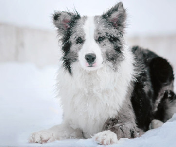 5 Common Winter Health Hazards for Dogs
