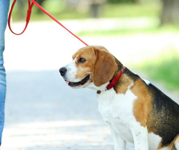 5 Tips to Control Your Dog on a Leash