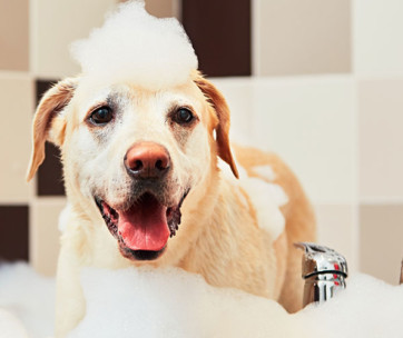 7 Common Bath-Time Mistakes Pet Owners Make