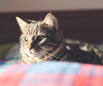 Best Dewormers For Cats