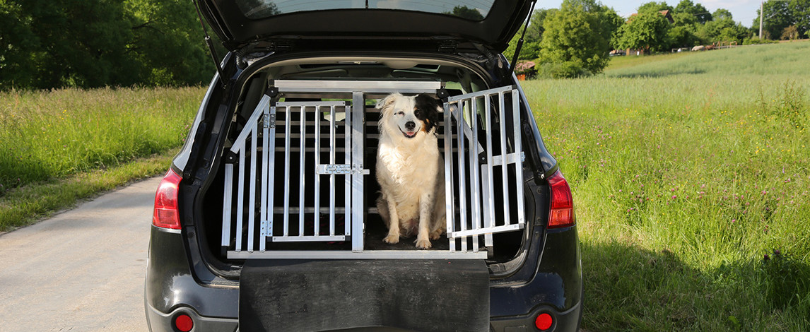 best dog car barrier