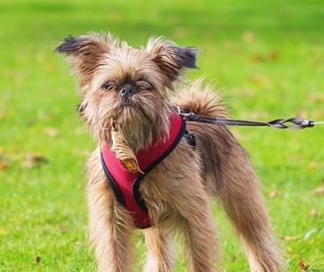 Best Dog Lift Harness