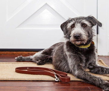 Best Electronic Dog Doors