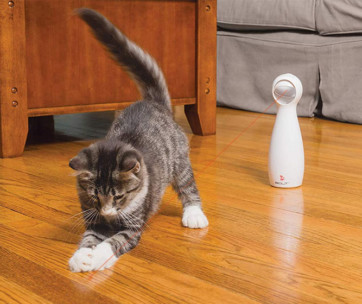 Best Laser Pointers for Cats