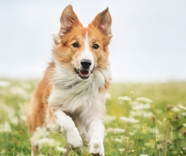 Best Probiotics for Dogs