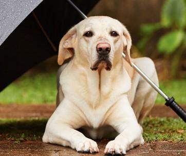 Best Umbrella for Dogs