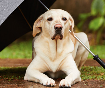 Best Umbrella for Dogs