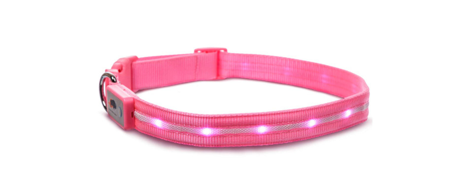Blazin' Safety Dog LED Collar