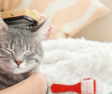 Cat Dandruff
