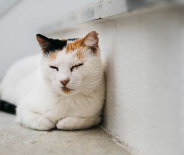 Cat Snoring: Is It Normal?