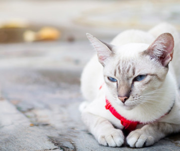 Depression in Cats: Is Your Cat Sad?