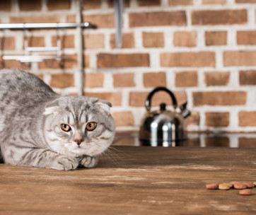 Do Cats Need Fiber in Their Diet