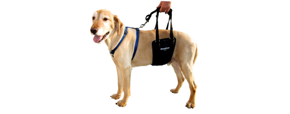 GingerLead Dog Support Harnesses