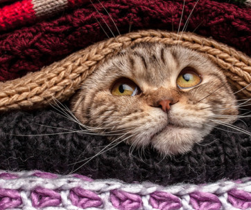 How Cold is Too Cold for Cats: Tips To Keep Your Cat Warm