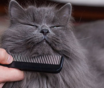 How to Gently Restrain Your Cat For Grooming