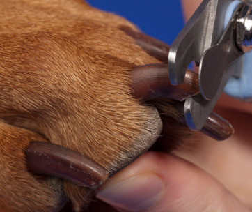How to Properly Cut Your Dog's Nails