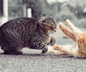 How to Stop a Cat Fight and Why They Happen