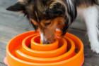 Outward Hound Slow Feed Dog Bowl