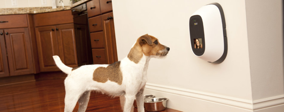 PetChatz HD Dog Camera