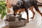 PetSafe Drinkwell Multi-Tier Dog Water Fountain