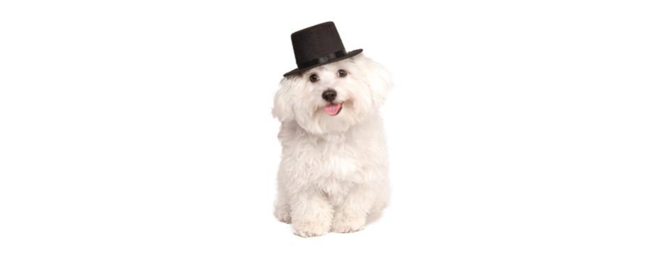 Rubies Costume Company Dog Hat