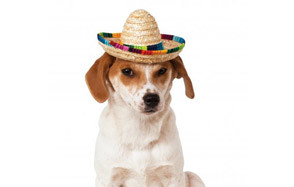 Rubies Sombrero Dog Hat with Multicolor Trim