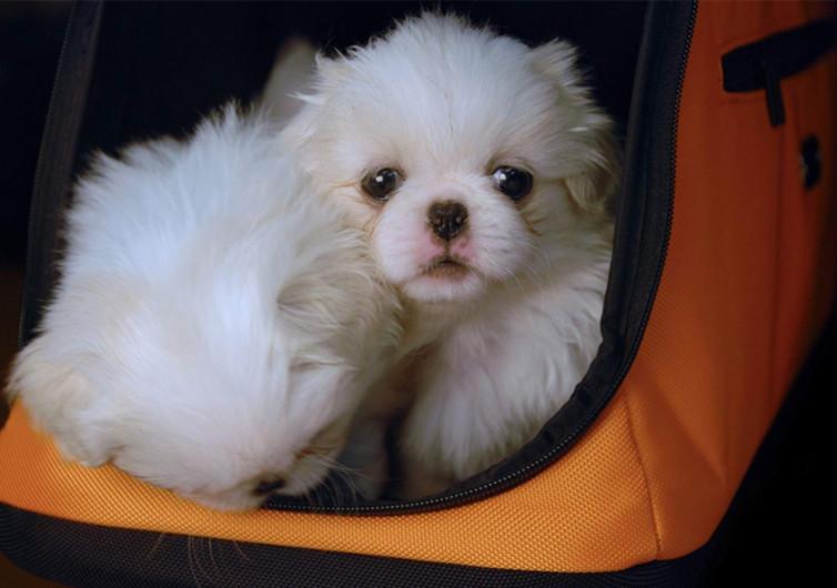 Sleepypod Air In-Cabin Pet Carrier