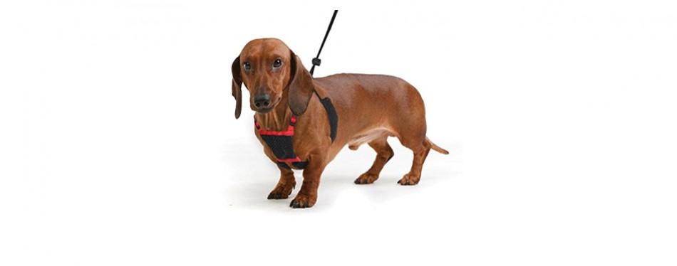 Sporn Dog Harness