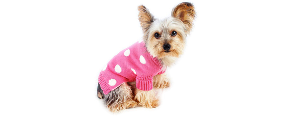 Stinky G Aqua Blue Dog Pet Sweater