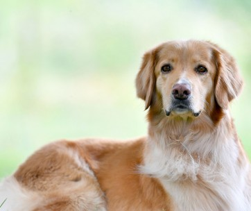 The Best Calcium Supplement for Dogs