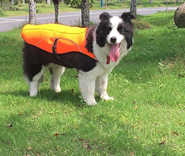 The Best Dog Cooling Vests
