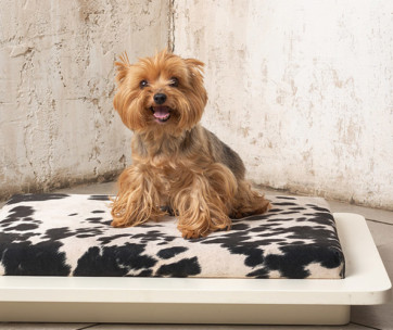 Best Pee Pads for Dogs
