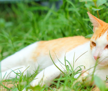The Best Vitamins For Cats