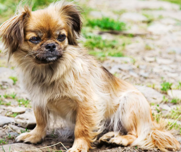 What is Small Dog Syndrome & How to Deal With it
