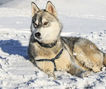 Why Do Dogs Love to Eat Snow
